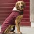 Kentucky Dog coat_